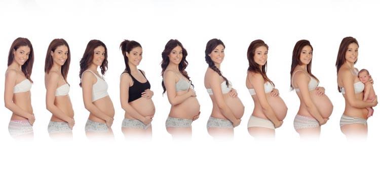 Grafische Darstellung des Schwangerschaftsverlauf anhand der Größe des Babybauchs