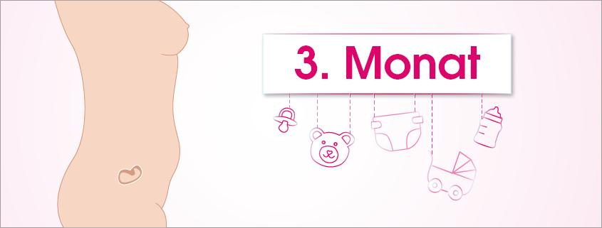 Grafik Schwangerschaft 3. Monat