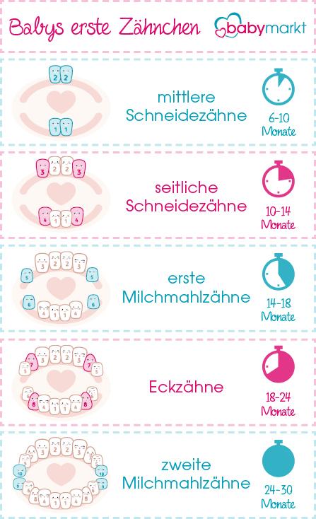 Infografik zu Babys erste Zähnchen