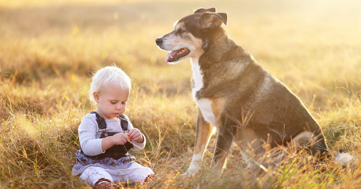 Hund passt auf Kind auf