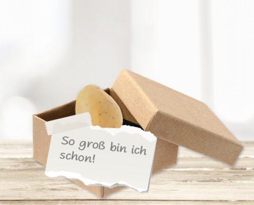 """Schwangerschaft verkünden mit Kartoffel in Box """"So groß bin ich schon"""""""