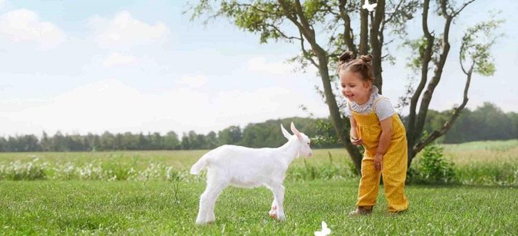 Kabrita Babynahrung Ziegenmilch